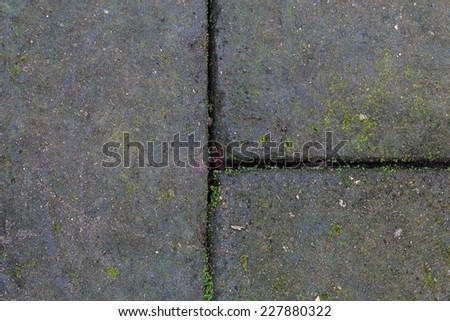 Texture of old stone wall covered green moss - stock photo