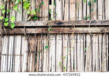 Texture of old wooden fence with climbing plants. - stock photo
