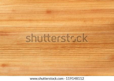 Texture of palm bark - stock photo