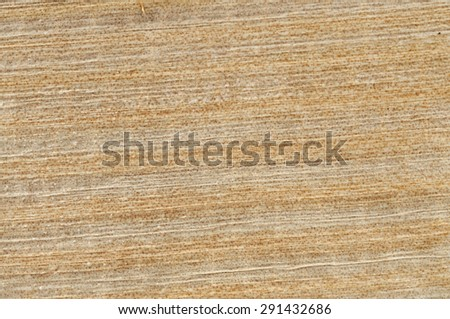 Texture of papyrus - stock photo