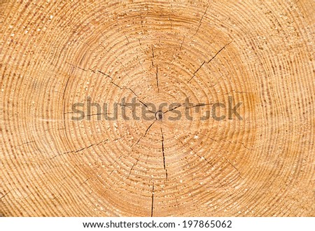 Texture of pine wood  - stock photo
