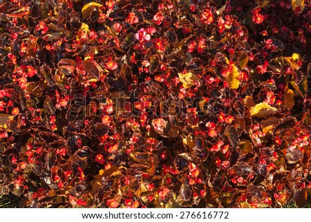 Texture of red flowers and autumn leaves - stock photo