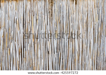 texture of the dry reeds - stock photo