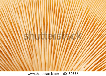 texture of the mushroom cap close-up - stock photo