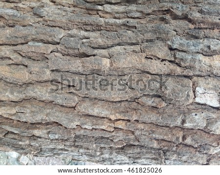 Texture of the old brown bark