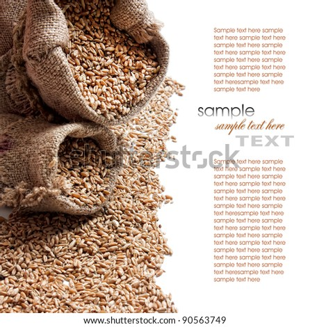 texture of the wheat grains - stock photo