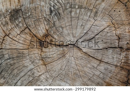 Texture of the wood from the trees