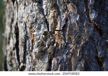Texture of tree bark in the forest.
