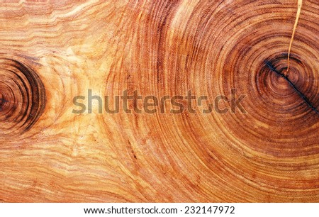 texture of tree stump.  - stock photo