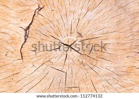 Texture of tree stump as background - stock photo