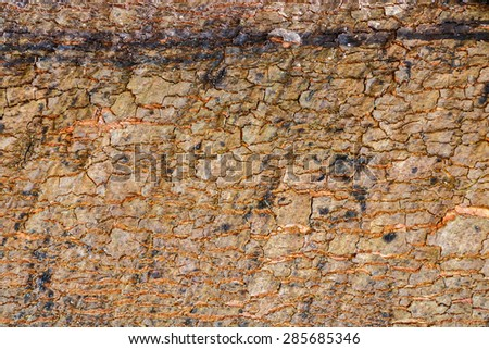 Texture of wood. - stock photo