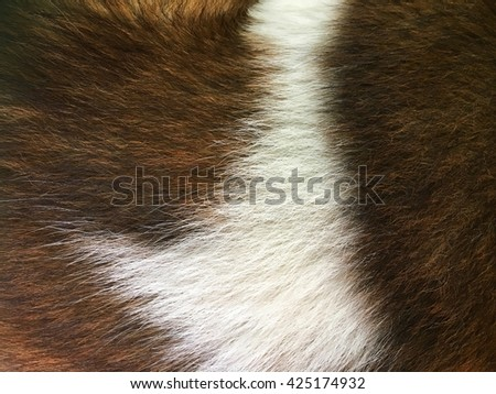 Texture of wool (animal hair)