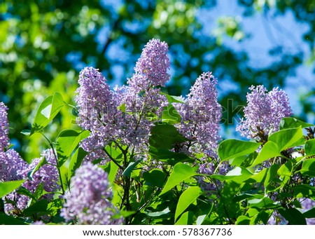 gynoecium gynoecium stock images royalty free images vectors shutterstock