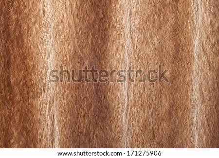 Texture raccoon fur-Stock Image - stock photo