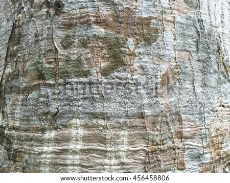 Textured bark shooting spot.