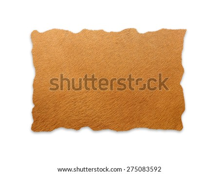 textured of real banteng skin frame on white background - stock photo
