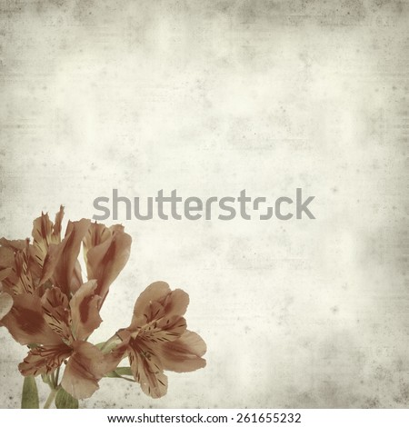 textured old paper background with Alstroemeria