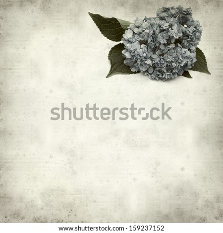 textured old paper background with blue hydrangea - stock photo