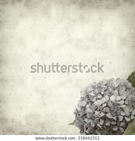 textured old paper background with blue lilac hydrangea - stock photo