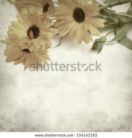 textured old paper background with calendula