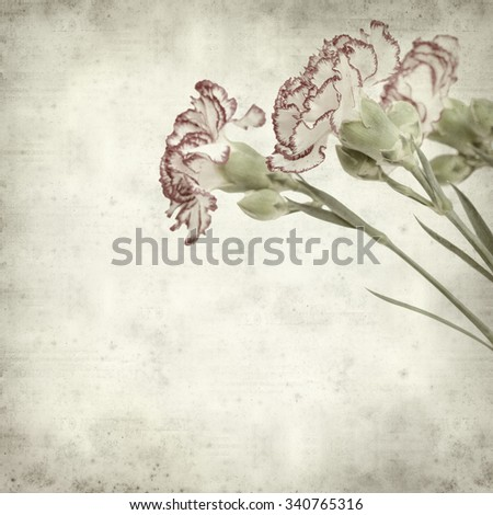 textured old paper background with carnation flower - stock photo