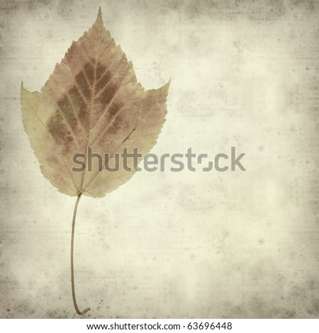 textured old paper background with colorful autumn leaf