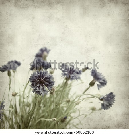 textured old paper background with cornflowers