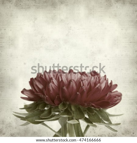 textured old paper background with dark pink aster flowers