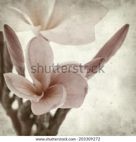 textured old paper background with frangipani flower - stock photo