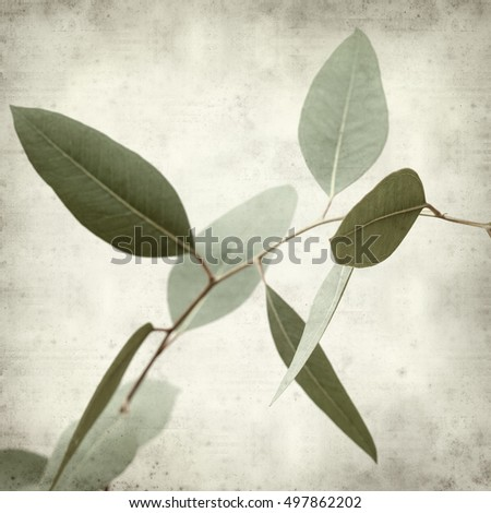 textured old paper background with fresh green eucalyptus leaves