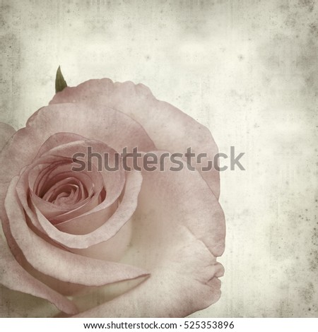 textured old paper background with gentle pink rose