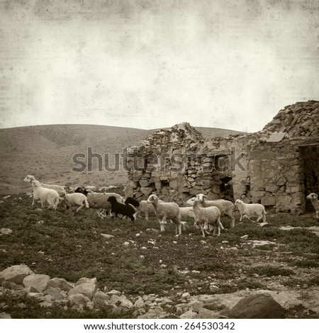 textured old paper background with landscape of Fuerteventura and sheep - stock photo