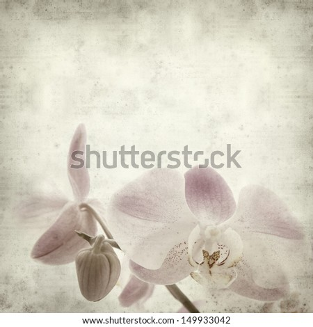 textured old paper background with light magenta phalaenopsis orchid