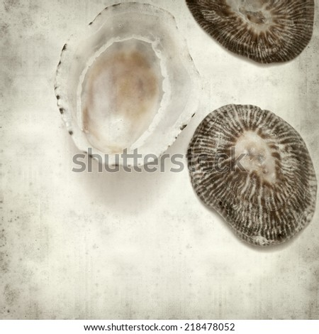 textured old paper background with limpet shells
