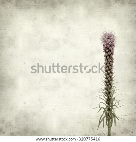 textured old paper background with magenta Liatris flower