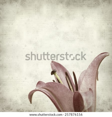 textured old paper background with pink open lily