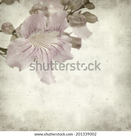 textured old paper background with pink tekoma flowers