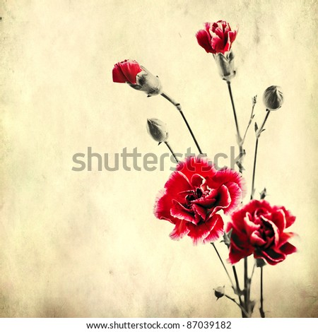 textured old paper background with red carnations - stock photo