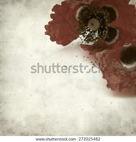 textured old paper background with red poppy wilting