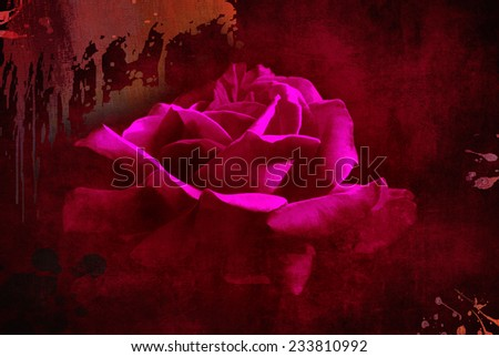 textured old paper background with red rose - stock photo