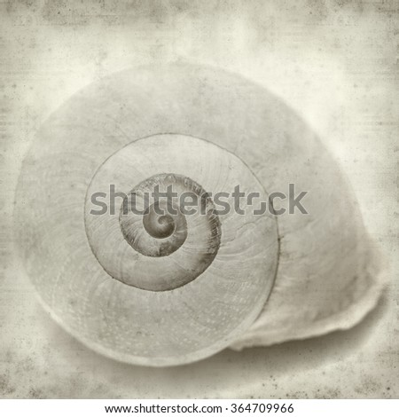 textured old paper background with sea snail shell - stock photo