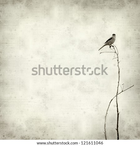 textured old paper background with  small bird on a dry brach - stock photo