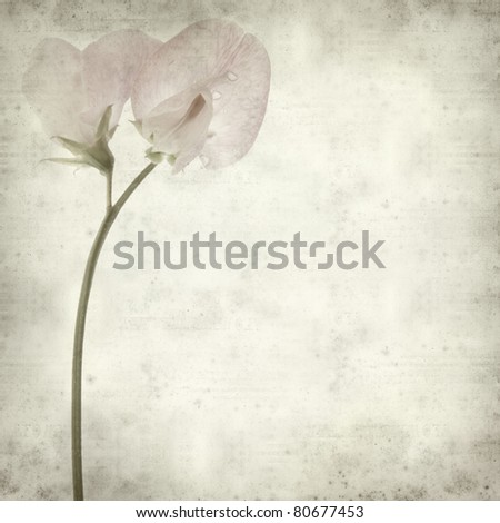 textured old paper background with sweet pea