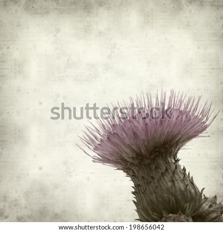 textured old paper background with thistle
