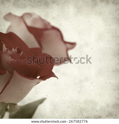 textured old paper background with two-toned roses