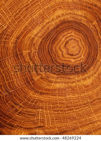 Textures   tree   oak - stock photo