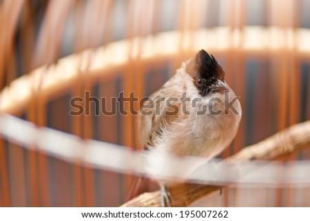 Thai Bird Cages - stock photo