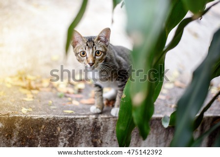 Thai cat hiding behind  branches