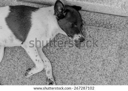 Thai dog lay down in temple - stock photo
