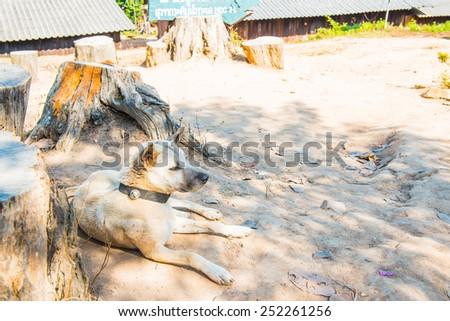 Thai dog on hill, Thailand. - stock photo